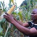 2020-166-africa-food-insecurity-1-congo-corn-1080px.jpg